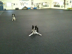 Dog Agility Surface with Rubber Sealant Being Used