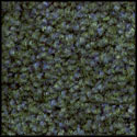 Dark Teal Green