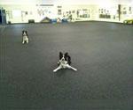 Dog Matting